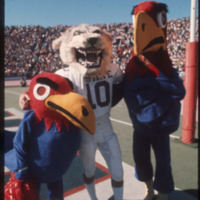 Big Jay and Baby Jay with Kansas State University's Willie Wildcat on the Football Field, 1970s