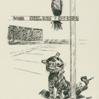 Jayhawk and MU tiger cartoon from the 1911 <em>Jayhawker Yearbook<br /></em>
