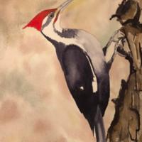 Woodrow Wilson (Pileated Woodpecker)