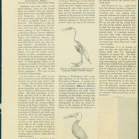 """Discovered:&nbsp; Ancestor of Jayhawkornis Kansasensis,"" <em>Graduate Magazine</em>, April 1932"