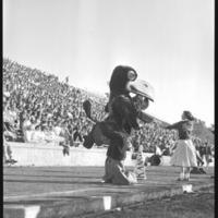 Jayhawk mascot and cheerleader performing a cheer during a football game, 1953