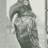 Jayhawk Mascot at Nebraska Football Game, 1922.