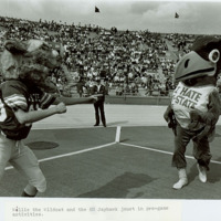 Big Jay and Willie Wildcat mascots jousting on the football field, 1983