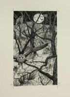 Marjory Bartlett Sanger, Forest in the Sand (New York: Atheneum, 1983).