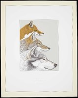 Wild Canines: Red Fox, <i>Vulpes vulpes</i>; Coyote, <i>Canis latrans</i>; Gray or Timber Wolf, <i>Canis lupus</i>