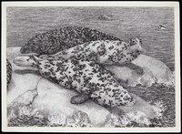 Gray Seals on Rocks