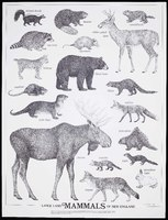 Large Land Mammals of New England